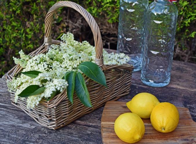 Elderflower cordial prep